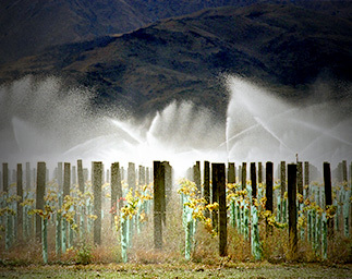 Horticulture - Viticulture
