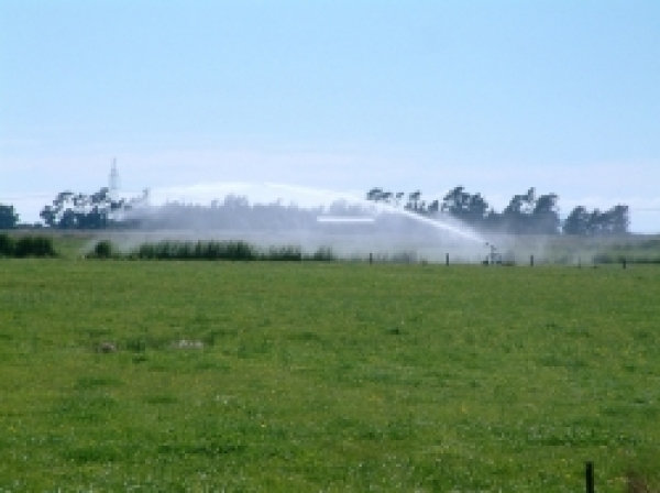 Travelling irrigators boost dairy pasture growth in Blenheim