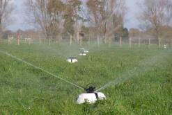 K-line & Pod irrigation