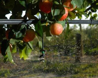 Horticulture Viticulture